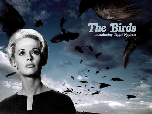 The-Birds-alfred-hitchcock-2422003-500-375